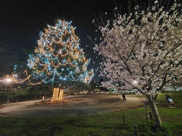 たまプラーザ 桜 イルミネーション